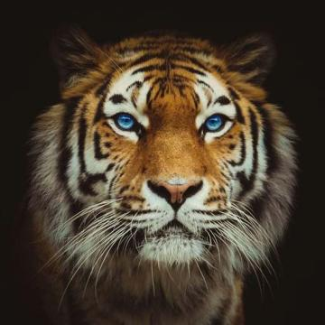 Picture with tags: Animals, Wallpapers